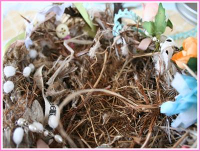 Nest2_2